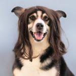 Peluquería canina en positivo