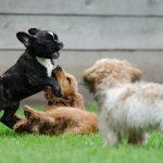 clases cachorros
